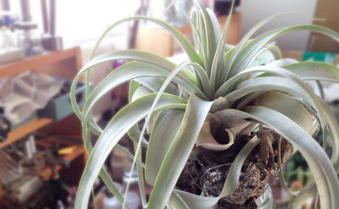 methodofraising-airplants01