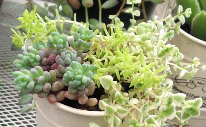 methodofraising-succulent-03