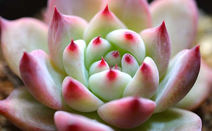 methodofraising-succulent-04