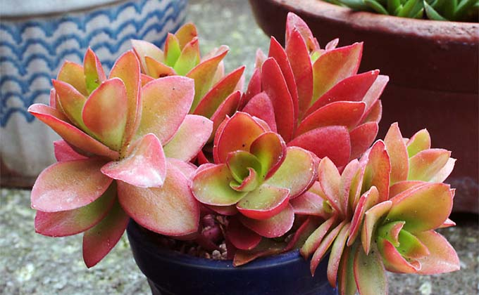 methodofraising-succulent-08