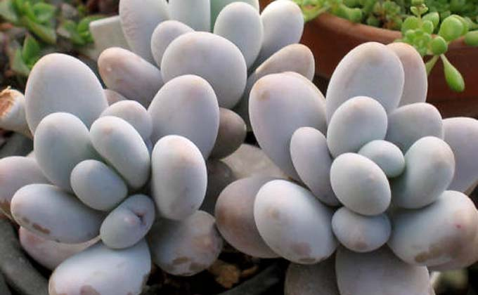 methodofraising-succulent-11