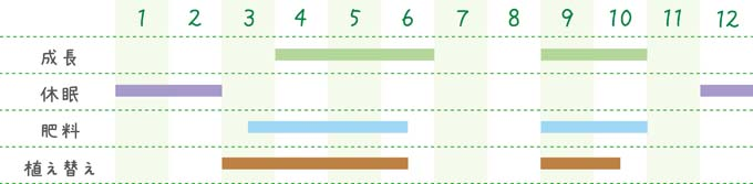 methodofraising-succulent-15