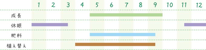 methodofraising-succulent-16