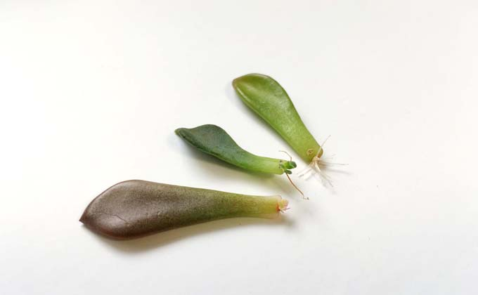 methodofraising-succulent-19
